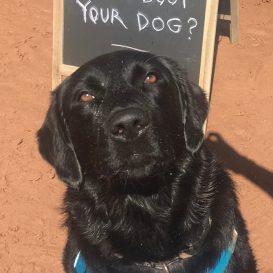 Doorstep Recommends: Dog Ballet